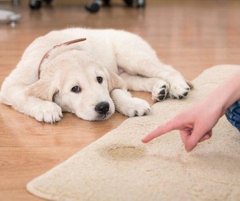 Carpet Odours